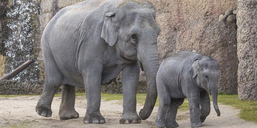 Elefantenpark Kaeng Krachan</b></strong> am 21.04.18